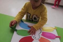 Montessori Aktivitesi rengarenk tavus kuşu ile renk eşleştirme
